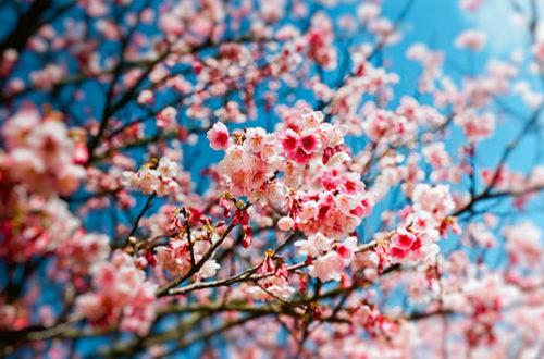 Article : Le printemps est là